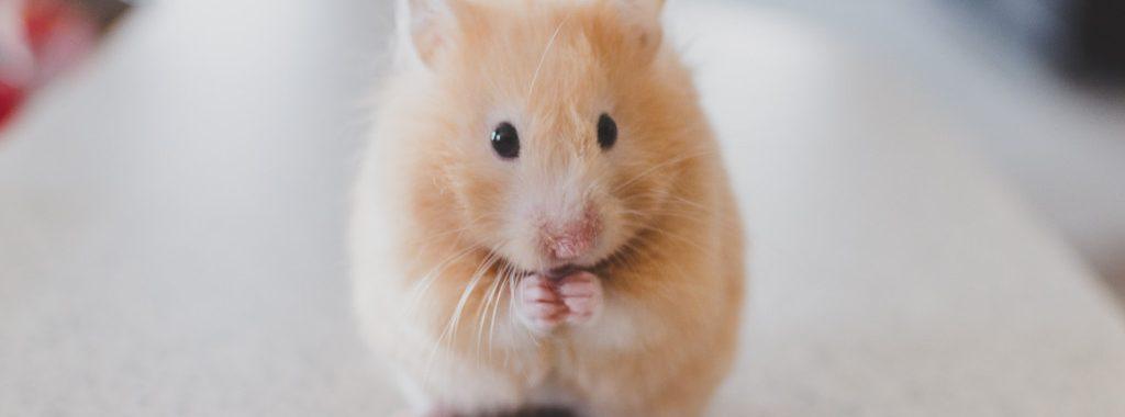 Hamster post